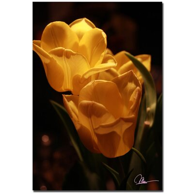 'Two Yellow Tulips' by Martha Guerra Photographic Print on Canvas by Trademark Art
