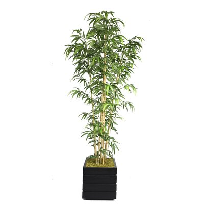 Tall Bamboo Tree in Planter by Laura Ashley Home