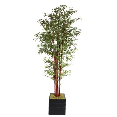 Tall Harvest Bamboo Tree in Planter by Laura Ashley Home