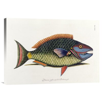 Bentley Global Arts 'The Parrot Fish' by Mark Catesby Painting Print on Canvas
