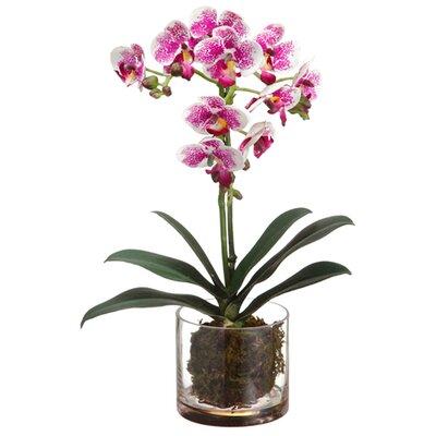 Phalaenopsis Orchid Plantin Glass Vase by Silk Flower Depot