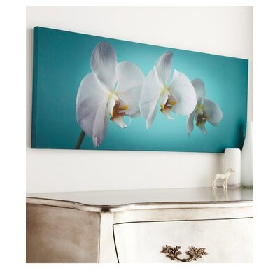 Graham & Brown 'Teal Orchid' Photographic Print on Wrapped Canvas