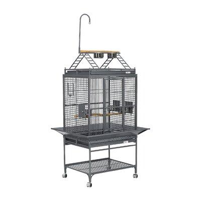 Avian Adventures Chiquita Play Top Bird Cage