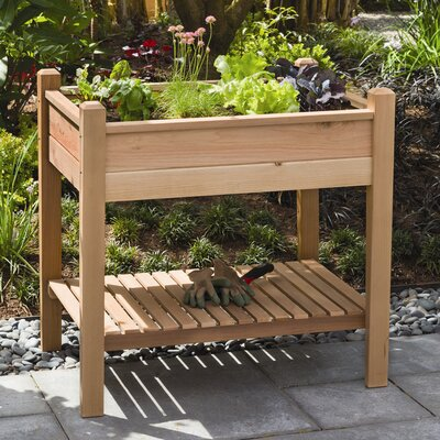 Phat Tommy Rectangular Planter Box by Buyers Choice