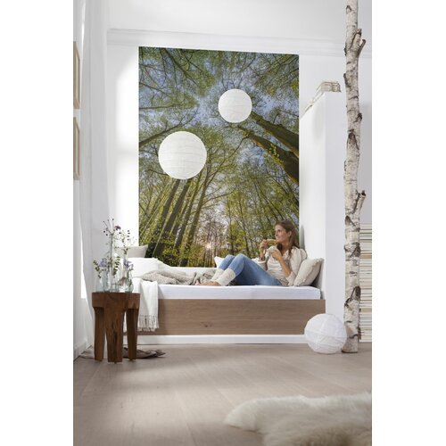 Komar canopy wall mural wayfair for Brewster home fashions wall mural