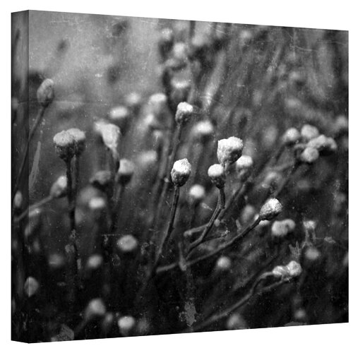 ArtWall ''Anticipation'' by Mark Ross Photographic Print on Canvas