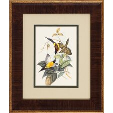 Bird Tropic 2 Piece Framed Graphic Art Set