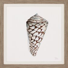 Modern Shell with Teal II Framed Painting Print