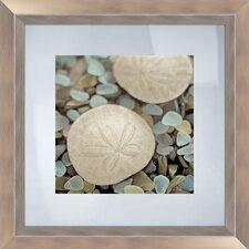 Sea Glass Sand Dollar Framed Photographic Print
