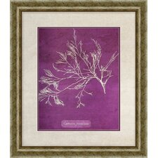 Coral I Giclee Framed Painting Print