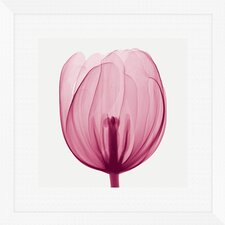 Tulips 2 Piece Framed Graphic Art Set in Pink and White