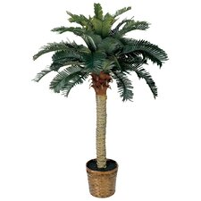 Sago Palm Tree with Basket