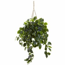 Pothos Hanging Plant in Basket