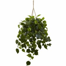 Philodendron Hanging Plant in Basket