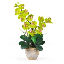 Double Phalaenopsis Silk Orchid Flowers in Green