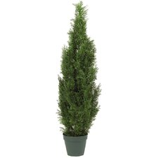 Cedar Tree Round Tapered Topiary in Pot