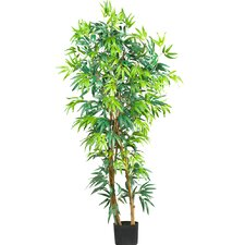 Curved Bamboo Tree in Pot