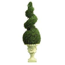 Cedar Spiral Topiary in Urn