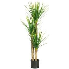 Silk Yucca Tree in Pot