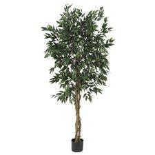 Smilax Tree in Pot