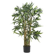 Biggy Bamboo Tree in Planter