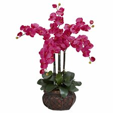 Phalaenopsis with Decorative Vase Silk Flower Arrangement in Beauty