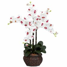 Phalaenopsis with Decorative Vase Silk Flower Arrangement in White