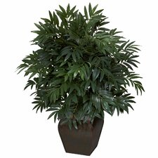 Double Bamboo Palm Floor Plant in Decorative Vase