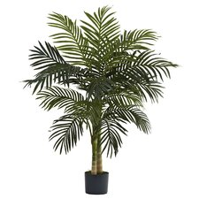 Golden Cane Palm Tree in Pot