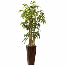 Bamboo Tree in Planter I