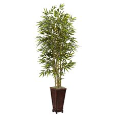 Bamboo Tree in Planter II