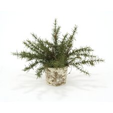 Silk Rosemary Desk Top Plant in Pot (Set of 3)