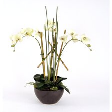 Silk Orchid Plants, Mondo Grass and Bamboo in Metallic Bowl