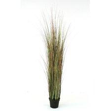 Silk Tall Sage Grass in Planter (Set of 4)