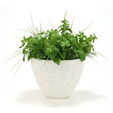 Silk Basil, Fern and Grass Desk Top Plant in Planter