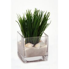 Grass in Cube Glass (Set of 2)