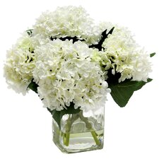 Waterlook Hydrangeas in Clear Square Glass