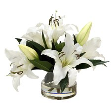 Casablanca Lilies in Low Round Glass Cylinder