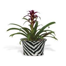 Kenya Oval Pot Planter