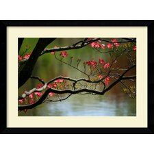 'Dogwood in Bloom' by Andy Magee Framed Photographic Print