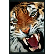 Bengal Tiger Close Up Framed Photographic Print