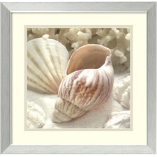 'Coral Shell II' by Donna Geissler Framed Photographic Print