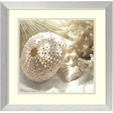 'Coral Shell I' by Donna Geissler Framed Photographic Print