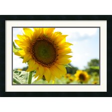 'Sunflowers' by Andy Magee Framed Photographic Print