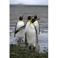 National Geographic Penguins Wall Mural