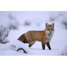 National Geographic Fox Wall Mural