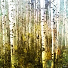 Aspen Ski Graphic Art on Canvas