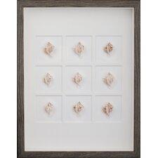 Murex Shells Wall Art Shadow Box in Brown