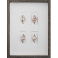 Tulip Shells Wall Art Shadow Box in Brown