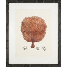 Red Coral II Framed Graphic Art